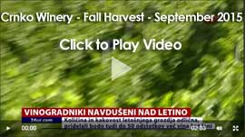 video-holder-crnko-harvest-sept-2015-270